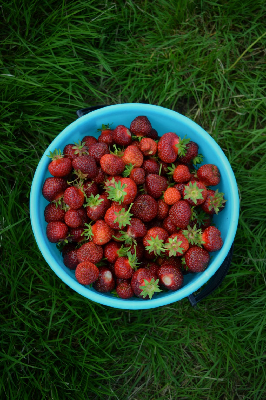 Finnish nature presents us: strawberries! adagioblog.com